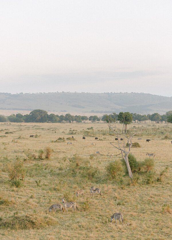 Masia Mara, Kenya