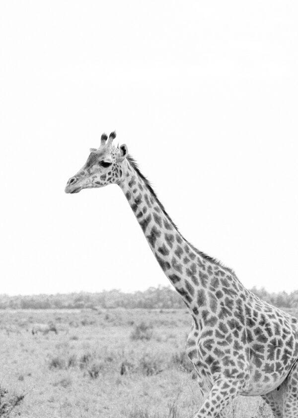 September 2016 | Masia Mara, Kenya