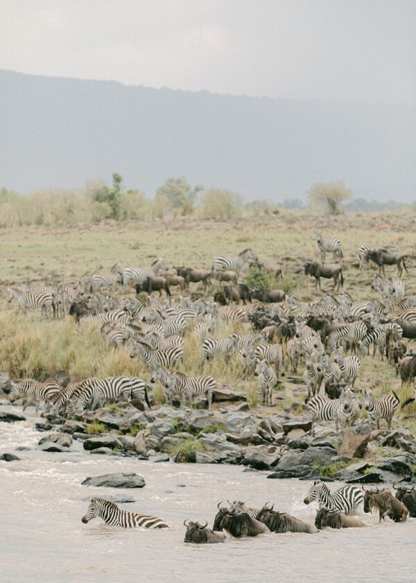 Great Migration, Masai Mara, Kenya - Holly Clark Editions