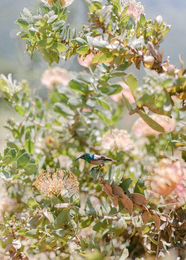 Kirstenbosch National Botanical Gardens | Constantia, South Africa