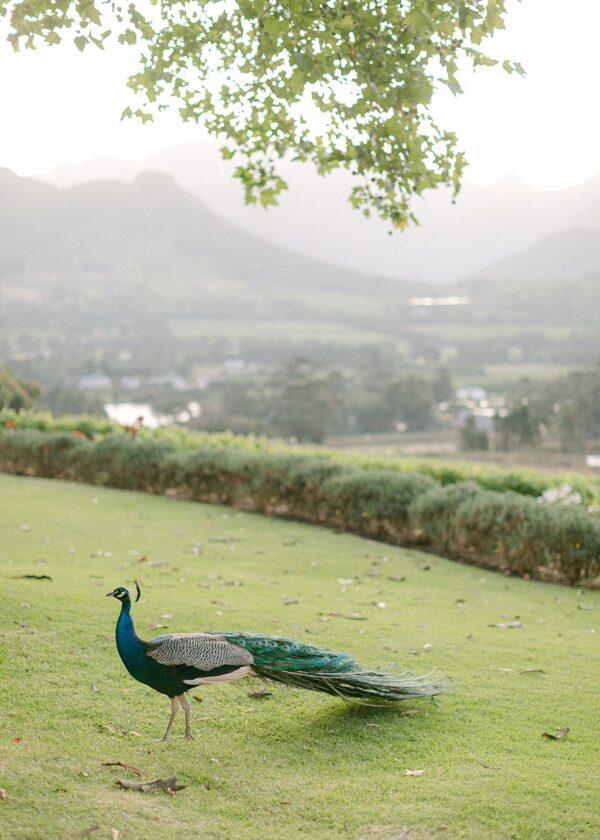 Le Petit Femme | Franschhoek, South Africa