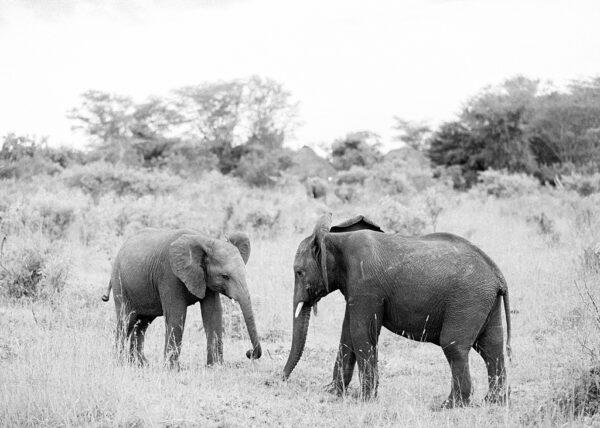 Baby Elephants - Holly Clark Editions