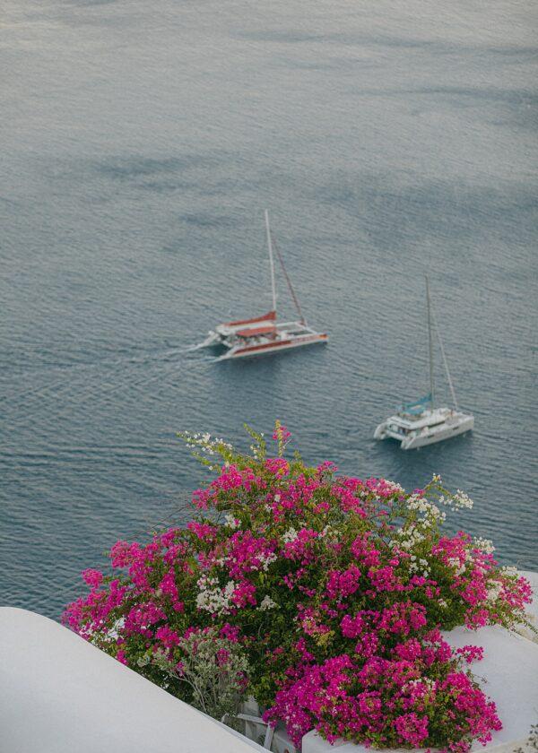 Bougainvillea at Sea - Santorini