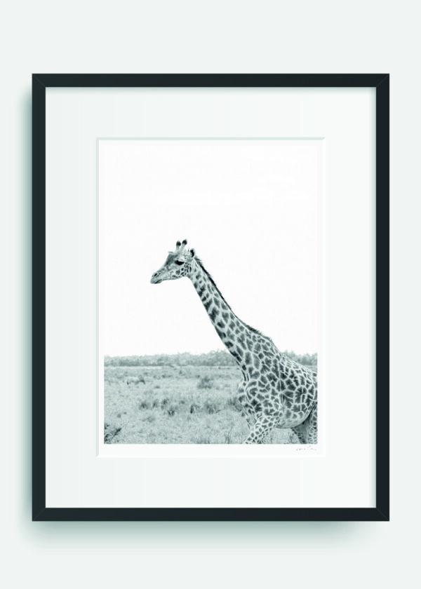 Kenyan Giraffe #2 - Masai Mara. Holly Clark Editions.