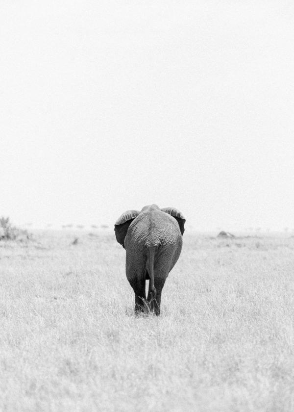 Holly Clark Editions, fine art print shop. Kenya Collection.